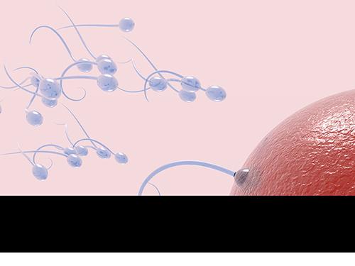 In Vitro Fertilisation (IVF)